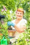 Женщина садовника активная старшая пожилая засаживает цветки в баке Стоковая Фотография RF