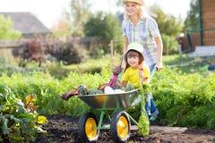Женщина садовника нажимая тачку с ребенк Стоковая Фотография RF