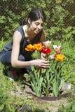 Женщина садовничая - сад весны с тюльпанами Стоковая Фотография RF