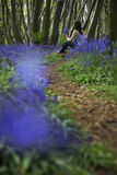 Женщина сидя в древесинах Bluebell Стоковое фото RF