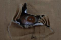 женщина смотря через отверстие с страхом Стоковое Изображение