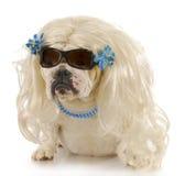 женщина собаки Стоковые Фотографии RF