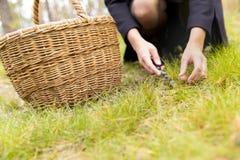 Женщина собирая грибы в темном мирном лесе, избежании от города, сборе гриба Стоковые Изображения RF