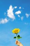 женщина солнцецвета руки Стоковое Фото