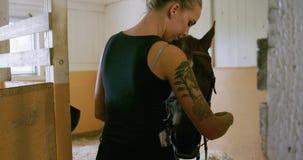 Женщина со светлыми волосами регулируя поясы перед ехать ее аравийская лошадь сток-видео