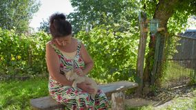Женщина страны штрихует кота сидя в тенях на стенде в дворе видеоматериал