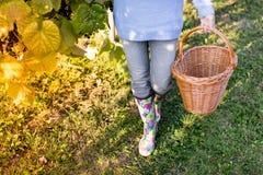 Женщина с корзиной в винограднике Стоковая Фотография RF