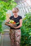 Женщина с корзиной растительности и овощей в парнике время хлебоуборки к Стоковое Изображение