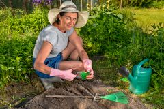 Женщина с ножницами режет пакет семени на предпосылке a Стоковая Фотография RF