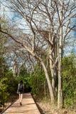 Женщина с прогулкой камеры на деревянном пути прогулки в лесе Фернандо de Noronha Стоковые Фото