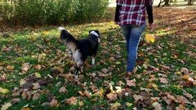 Женщина с собакой в парке акции видеоматериалы