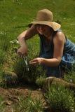 Женщина с levander стоковое фото rf