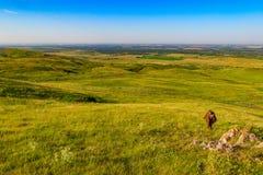 Женщина турист взбирается наклон холма Стоковые Изображения