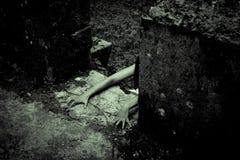 Женщина ужаса страшная Стоковые Изображения