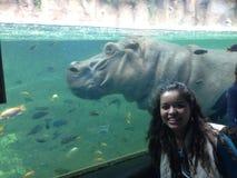 Женщина уловила видеть бегемота под прозрачной водой стоковая фотография