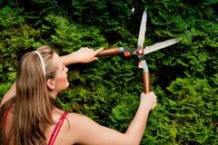 женщина утески изгороди сада стоковое изображение