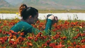 Женщина фотографирует поле цветя маков в горах видеоматериал