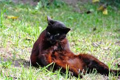 Женщина 30 ханжи что-то кот Стоковые Фотографии RF