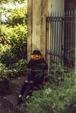 Женщина хеллоуина с тыквой стоковое изображение rf