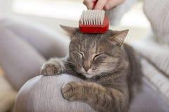 Женщина чистя кота щеткой стоковое фото rf