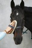 Женщина prepairing лошадь для езды стоковые фото