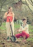 женщины вала плодоовощ счастливые засаживая Стоковое фото RF