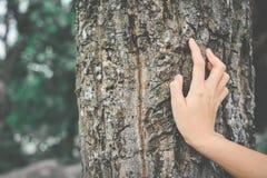 Женщины вручают и большое дерево Стоковые Фотографии RF