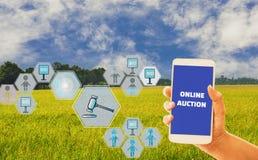 Женщины вручают смартфон удерживания со значком аукциона для сельскохозяйственных продуктов, предпосылку неба и органические поля стоковые изображения
