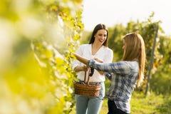 2 женщины в винограднике Стоковая Фотография