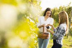 2 женщины в винограднике Стоковые Фотографии RF