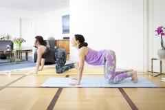 2 женщины делая представление коровы йоги дома Стоковое фото RF