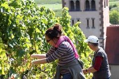 2 женщины жать виноградины Стоковые Фотографии RF