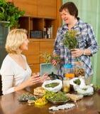 2 женщины заваривая травяной чай Стоковое фото RF