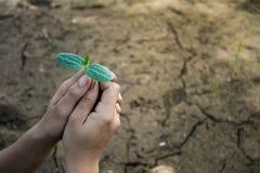 Женщины засаживая деревья назад к природе Стоковое Изображение