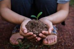 Женщины засаживая деревья для того чтобы создать прожитие Стоковые Фотографии RF