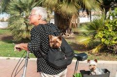 Женщины и собаки на велосипеде Стоковое Фото