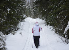 Женщины идя в лес на снежном пути Стоковое Изображение RF
