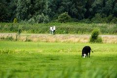 2 женщины идя на дорогу в сельском районе Стоковые Фотографии RF