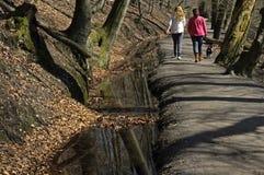 Женщины идя на след леса с собакой Стоковые Фото