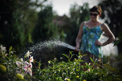 Женщины моча цветки Стоковое Изображение RF