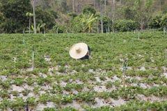 Женщины нося большие клубники рудоразборки шляпы Стоковое фото RF