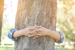 Женщины обнимают большое дерево Стоковые Фотографии RF