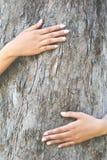 Женщины обнимают большое дерево Стоковое фото RF