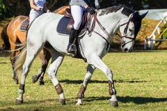 Женщины лошадей всадников Стоковые Изображения RF