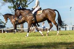 Женщины лошадей всадников Стоковое Изображение RF
