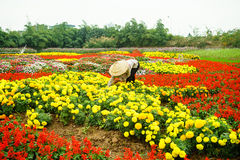 Женщины одно работая в саде, Ханое Стоковые Изображения