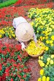 Женщины одно работая в саде, Ханое Стоковое Фото