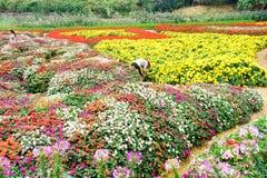 Женщины одно работая в саде, Ханое Стоковые Фото