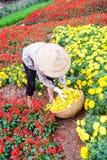 Женщины одно работая в саде, Ханое Стоковая Фотография RF