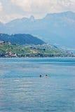 Женщины плавая в побережье женевского озера и Лозанны Стоковое Фото